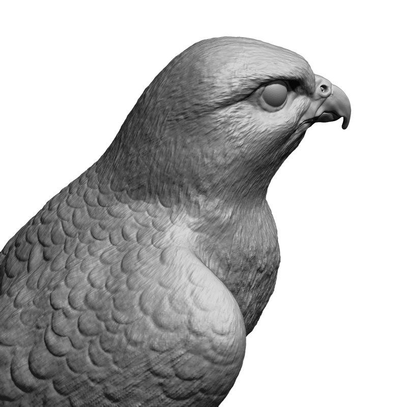3d falcon bird basic shape