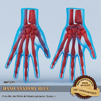 Hand Anatomy Blue