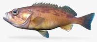 3d squarespot rockfish model