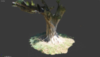 3d model of tree trunk 1