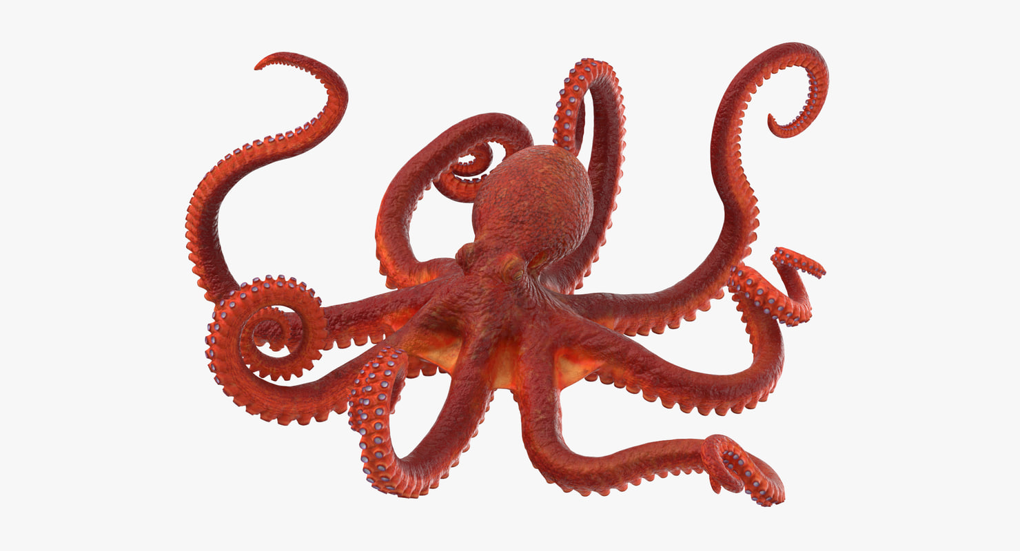 octopus rigged - max