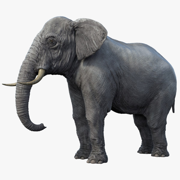 3d elephant realistic arnold