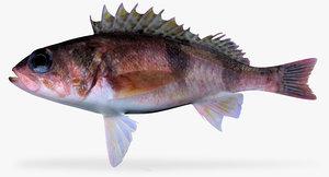 3d model halfbanded rockfish