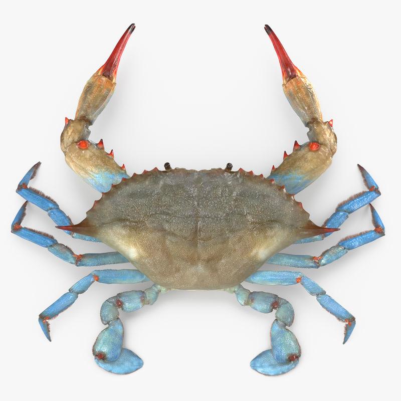 3d model atlantic blue crab