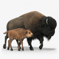American Bison GROUP(FUR)(RIGGED)