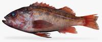 3d model of vermillion rockfish