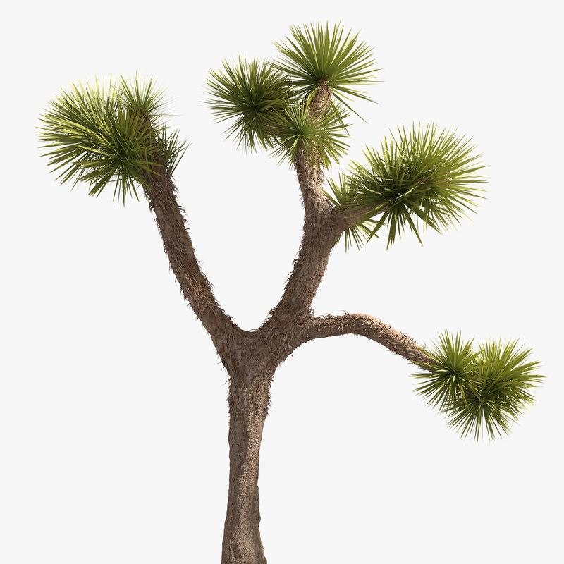 max desert plant tree