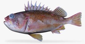 3d greenblotched rockfish model