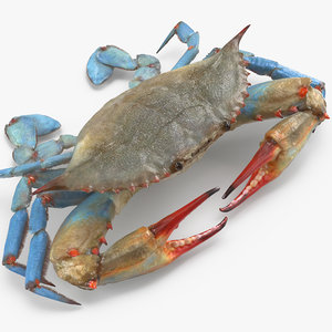 3d model chesapeake blue crab
