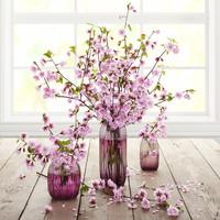 cherry flowers 3d model