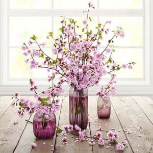 3d model cherry flowers