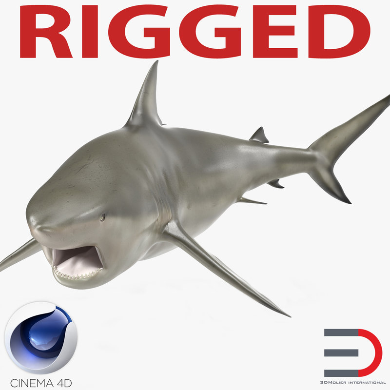 pigeye shark rigged 3d c4d