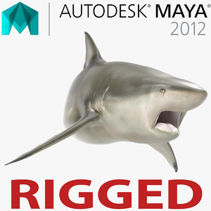 pigeye shark rigged 3d model
