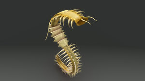 maya chaetopterus e