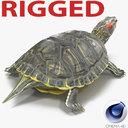 Western Pond Turtle 3D models