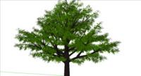 3d model mango tree