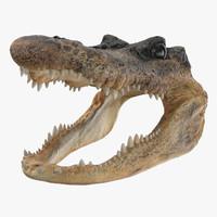 aligator head 3d obj
