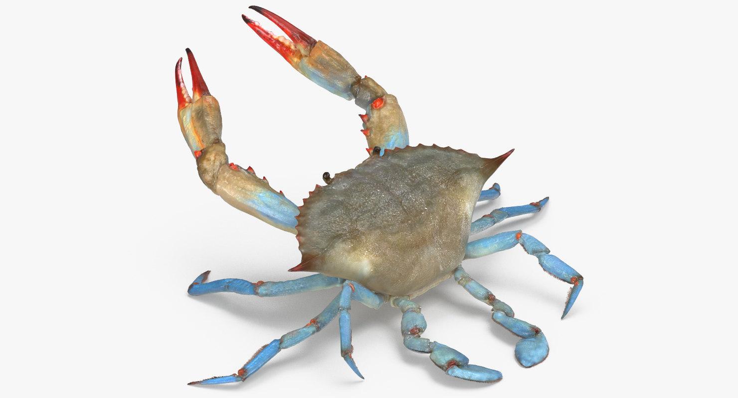 max atlantic blue crab rigged