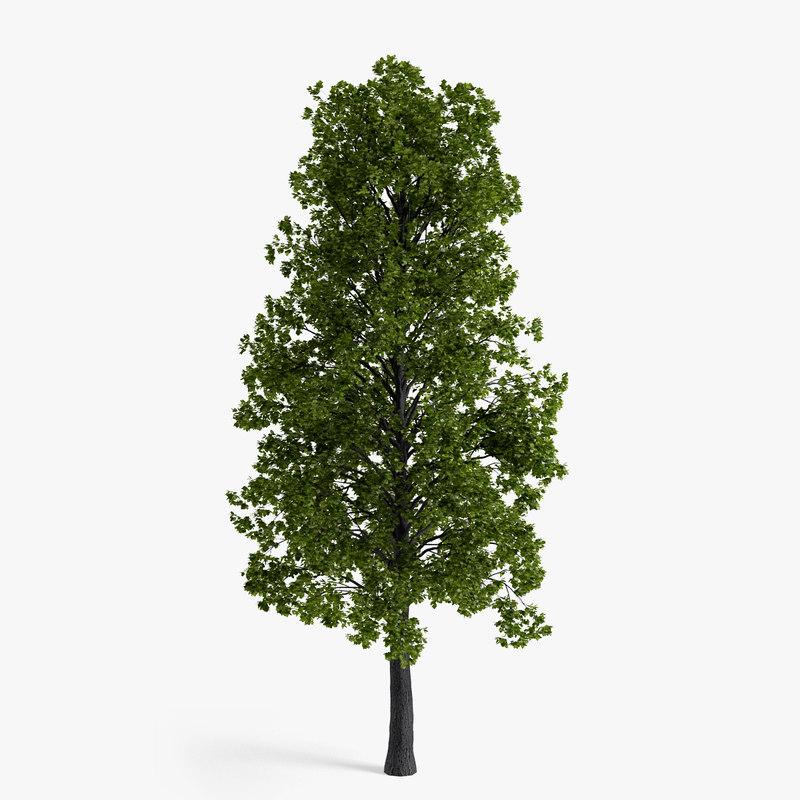 3d model linden tree