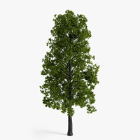 3d model linden tree