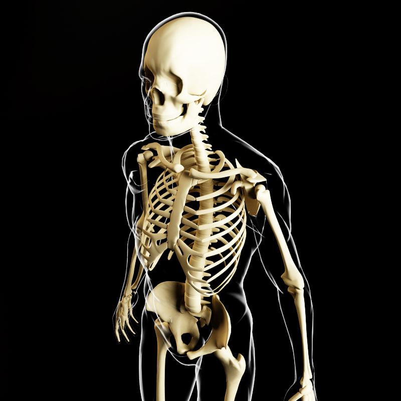 skeleton human body 3d max