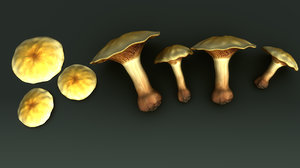 basidiomycetes 3d model