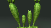 3d model basidiospore fungi