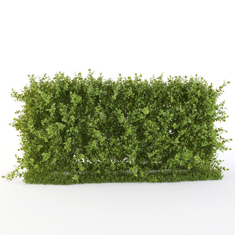 hedge bushes 3d obj