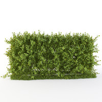 hedge bushes 3d obj