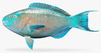 azure parrotfish 3d model
