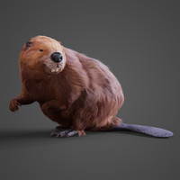 obj realistic beaver