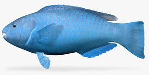 blue parrotfish fbx