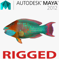 Rainbow Parrot Fish Rigged for Maya