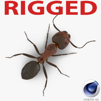 3d red ant rigged