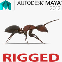 Red Ant Rigged for Maya