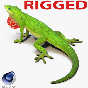 carolina anole lizard rigged 3d c4d