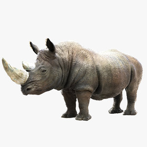 rhinoceros rhino 3d model