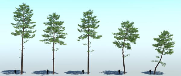 3d pine tree 5