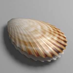 3d scallop shell