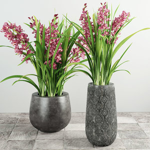 3d orchid flower plant