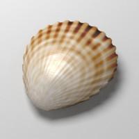 3d scallop shell