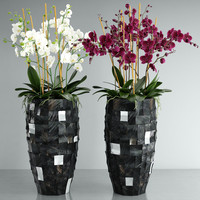 3d orchid flower model