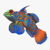 3d mandarin fish mandarinfish model