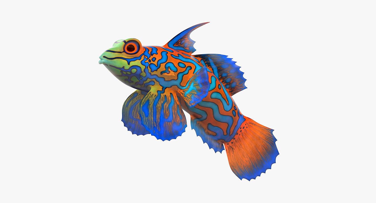3d mandarin fish mandarinfish model