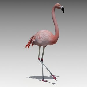3d model flamingo animations