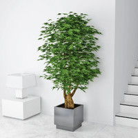 3d model plant houseplant house