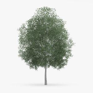 c4d common hornbeam tree 13m