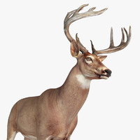 3d model deer animation