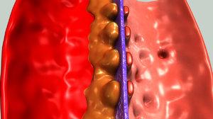 glomerulus section 3d obj