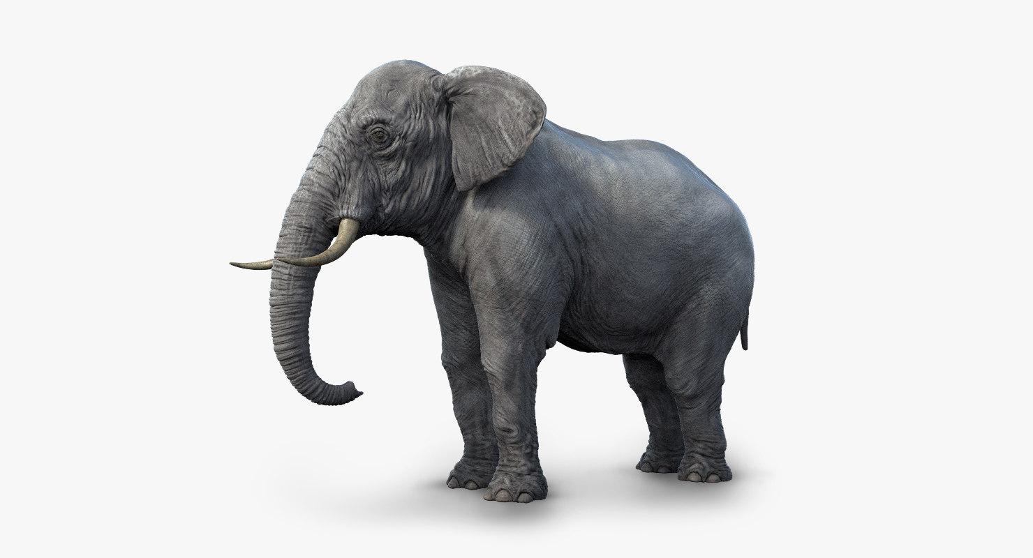 elephant realistic arnold 3d x